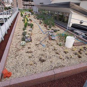 屋上庭園やってマース!